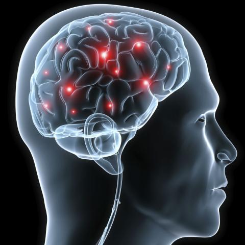 Human brain and nervous system Homework Gnome