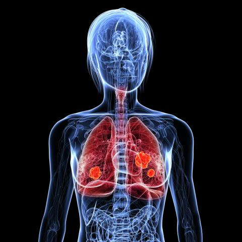 Human respiratory system Homework Gnome