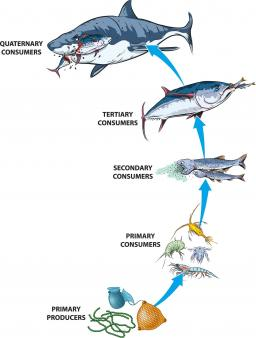 Food Chains And Food Webs Explained What Are Food Chains Food