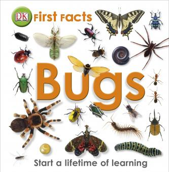 insects pictures with names pdf