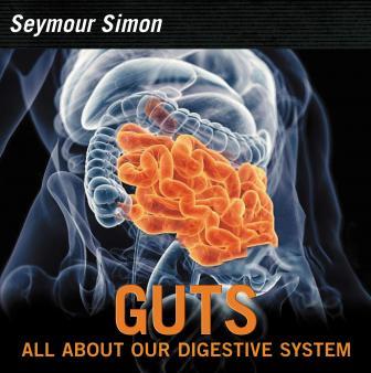 Human Digestive System For Ks1 And Ks2 Children Human Digestive