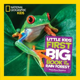 0d5396af Rainforest information for children | KS1 and KS2 rainforest ...
