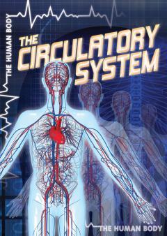 Human circulatory system for KS1 and KS2 children | Heart