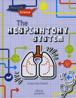 Human respiratory system for KS1 and KS2 children | Lungs