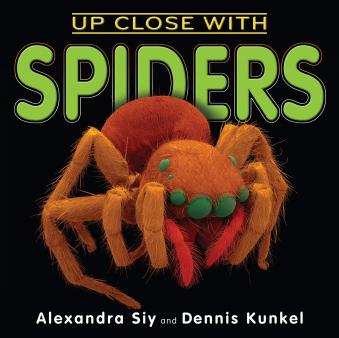 Spider facts and information for children | Spiders for kids
